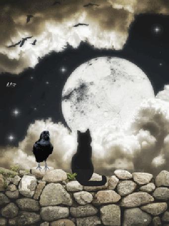 Фото Черная кошка смотрит на луну, рядом сидит ворон