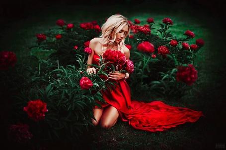 Фото Девушка в красном платье сидит у кустов пионов, фотограф Светлана Беляева
