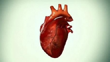 Фото Бьющееся сердце на белом фоне