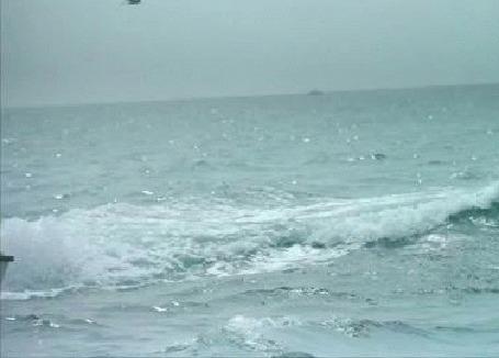 Фото Дельфин выпрыгивает из моря