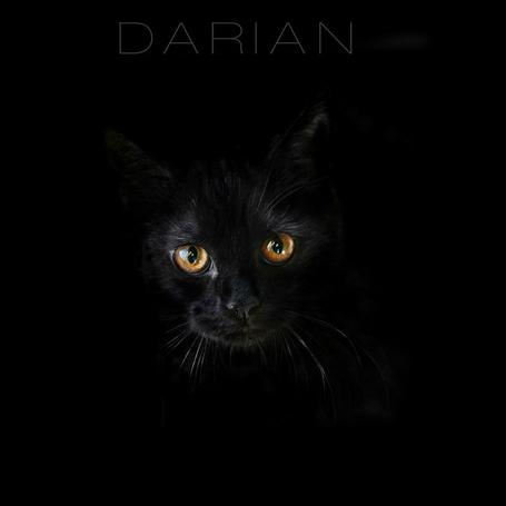 Фото Морда черной кошки на черном фоне. DARIAN