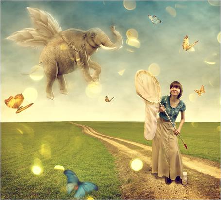 Фото Девушка стоит на дороге с сачком и ловит бабочек, сзади летает слон с крыльями