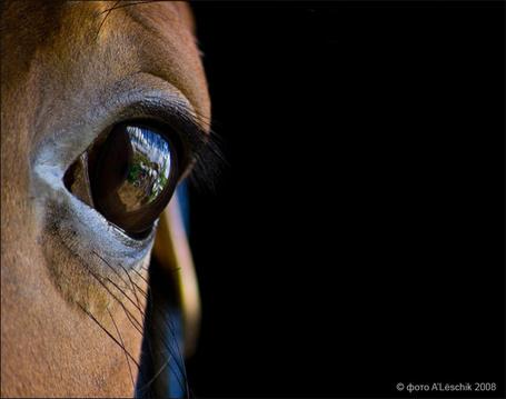 Фото Глаз лошади крупным планом на черном фоне, с отражением в нем деревенского пейзажа, автор ALeschik