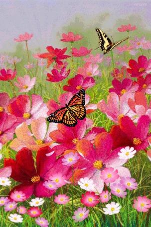 Фото Над цветами порхают две бабочки,