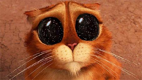 Фото В глазах кота в сапогах отражается бесконечность звездного неба, мультфильм Кот в сапогах и три дьяволенка / Puss in boots the three diablos