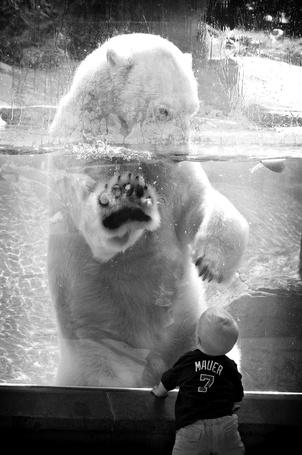 Фото Ребенок смотрит на белого медведя за стеклом
