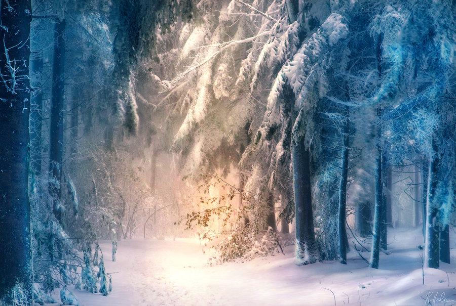 Лес, усыпанный снегом