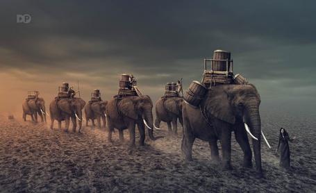 Фото Девушки верхом на слонах, которые везут большие бочки, by Dheny Patungka