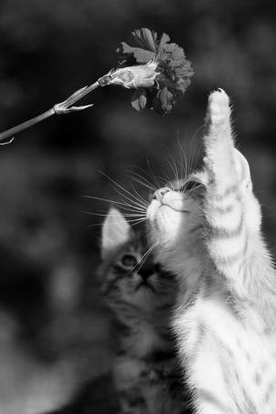 Фото Два котенка смотрят на цветок