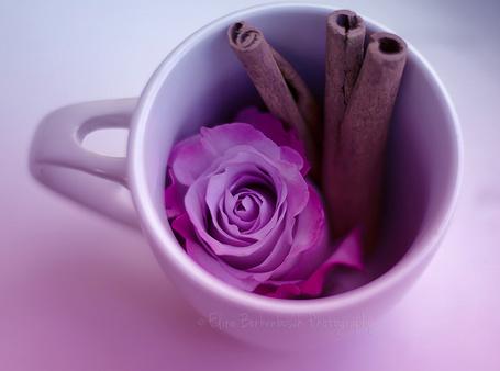 Фото Чашка с розой и трубочками корицы