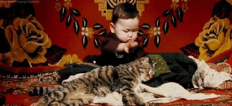 Фото Ребенок старательно гладит лежащую рядом с ним кошку