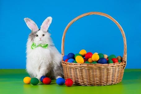 Фото Кот с кроличьими ушками сидит коло корзины с разноцветными пасхальными яйцами