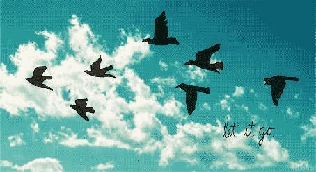 Фото Птицы летят на фоне неба (Let it go / Отпусти)