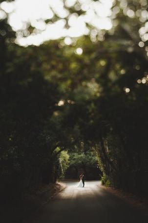 Фото Пара молодоженов стоят в конце дороги под высокими деревьями