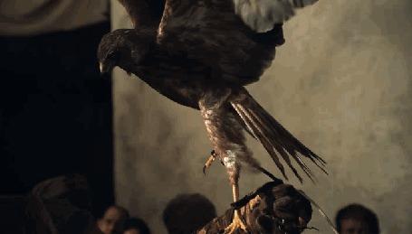 Фото Ястреб садится на руку человека, кадр из сериала Spartacus / Спартак 2 сезон 7 серия