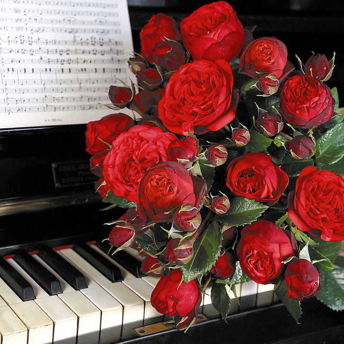 Учитель фортепиано открытка, путешествия