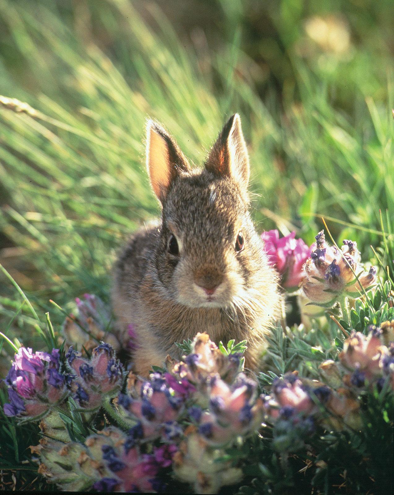 картинки весна зайчата