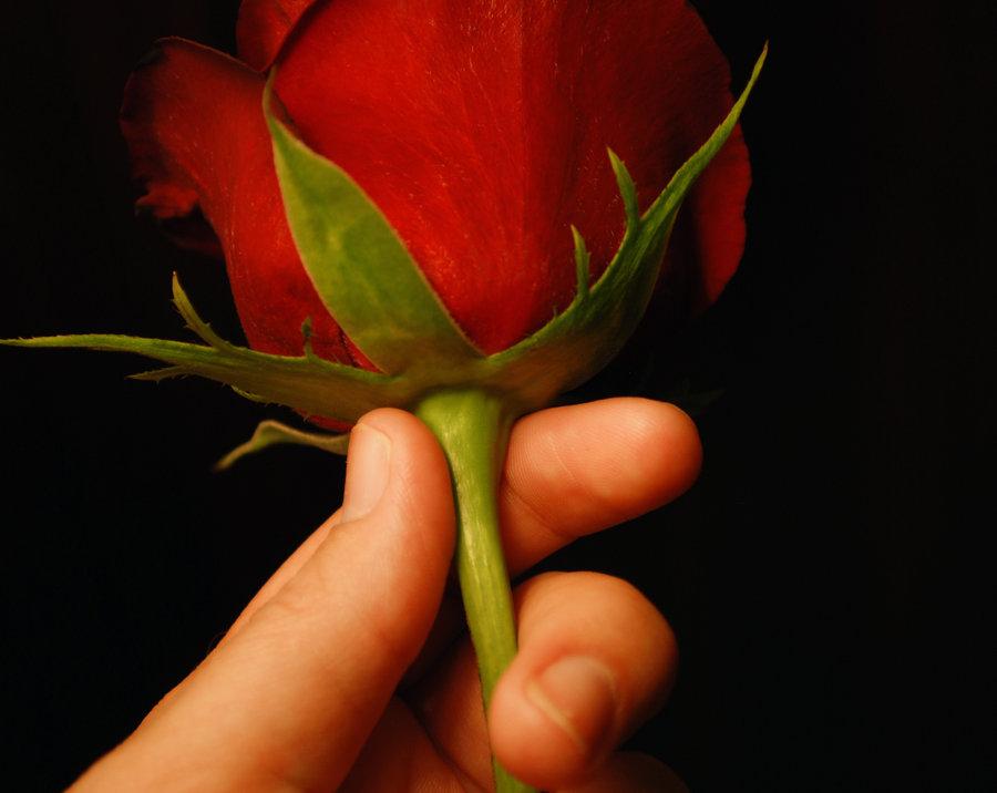Рука мужчины с цветком и женская рука 56