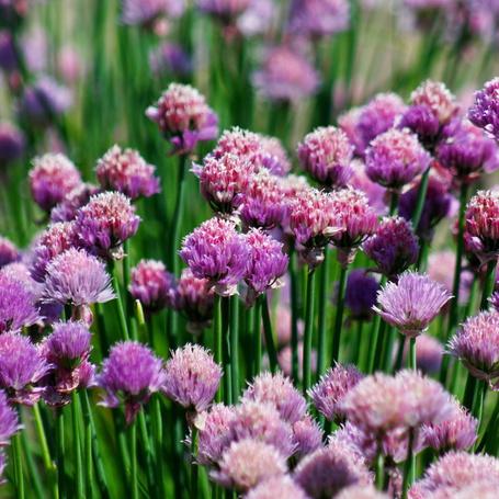 Фото Сиреневые цветы на размытом фоне