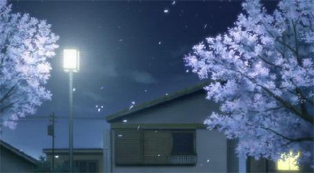 Фото Ночью лепестки сакуры облетают с деревьев в свете горящего окна и фонаря рядом с домом