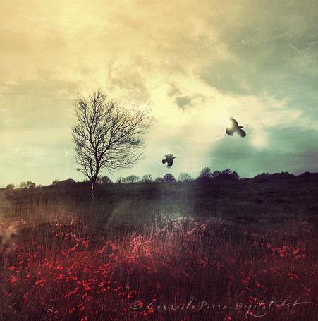 ���� ����� � ���� � �������� ������ � ����, by Aeternum-Art (� zmeiy), ���������: 04.09.2014 23:20