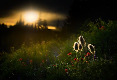 Фото На переднем плане полевые цветы в свете лучей солнца в закате, фотограф Ursula Abresch