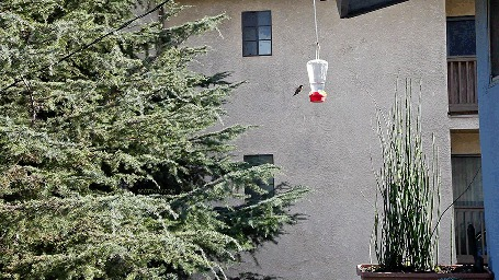 Фото Колибри порхает в воздухе около, подвешенной возле дома, кормушки
