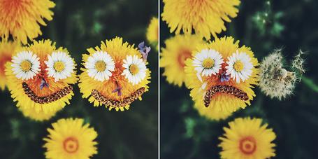 Фото Сначала два улыбающихся одуванчика, но потом один отцвел и второй грустит, фотограф Johann Frick