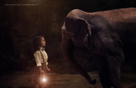 Фото Девочка с фонарем в руках смотрит слону в глаза, by Kevin Cook