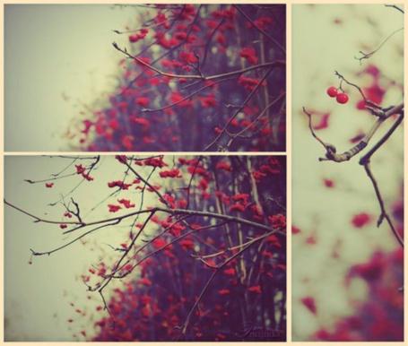 Фото Голые ветки с красными ягодами