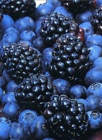 Фото Много ягод черники и ежевики