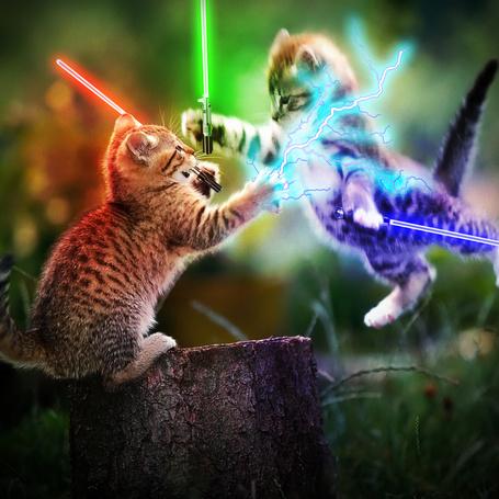 Фото Котята сражаются на световых мечах