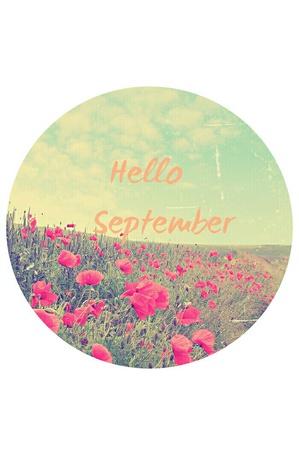 Фото Поле красных маков (Hello September / Привет сентябрь)