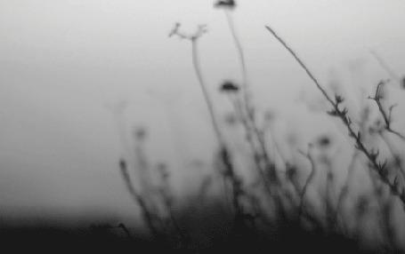 Фото Полевые цветы в тумане