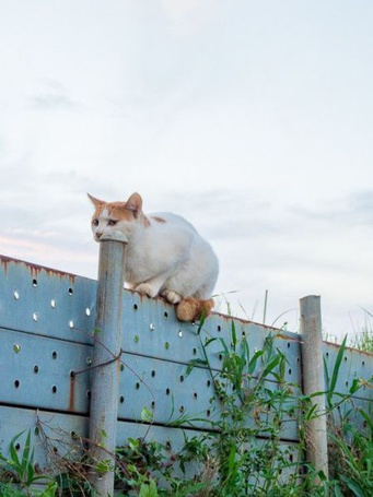 Фото Кошка сидит на заборе, положив морду на трубу