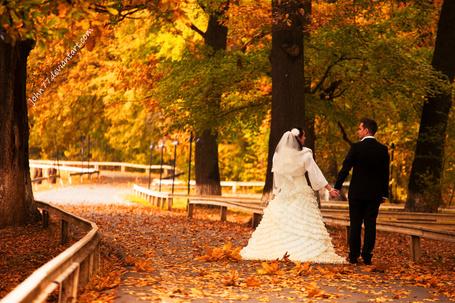 Фото Молодожены, идущие по аллее парка, усыпанной осенними листьями