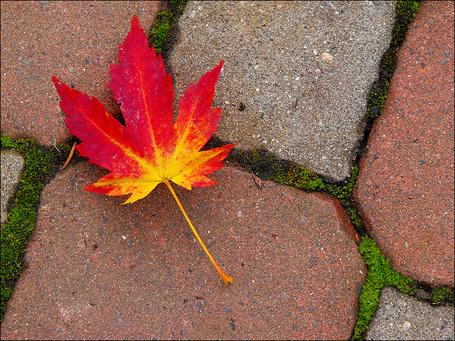 Фото Осенний листок на асфальте
