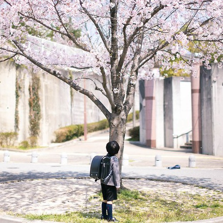 Фото Мальчик под сакурой