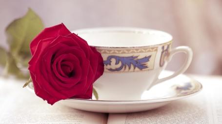 Фото Чашка с розой
