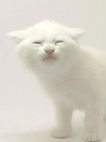 Картинки лизуны анимация котята, открытки