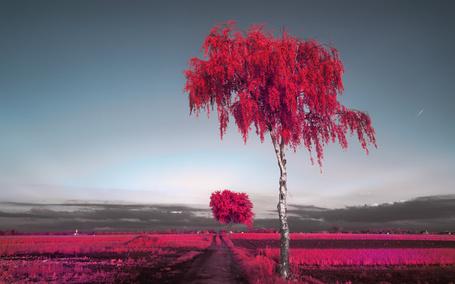 Фото Красные деревья в ярком поле (© zlaya), добавлено: 25.09.2014 21:40