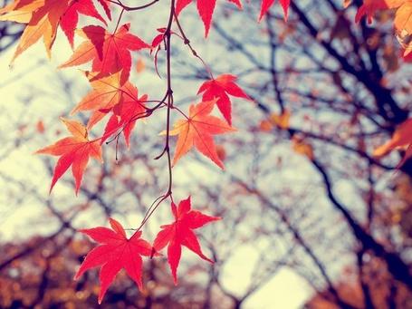 Летящие по ветру листья смотреть