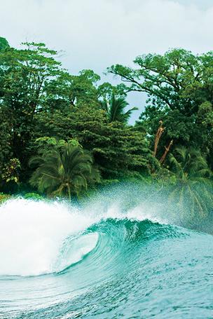 Фото Океанская волна, на фоне берега с экзотической растительностью