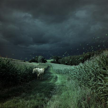 Фото Лошадь идет по дороге