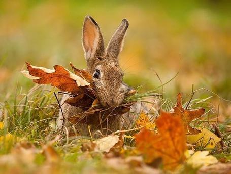 Фото Зайчик с листвой во рту