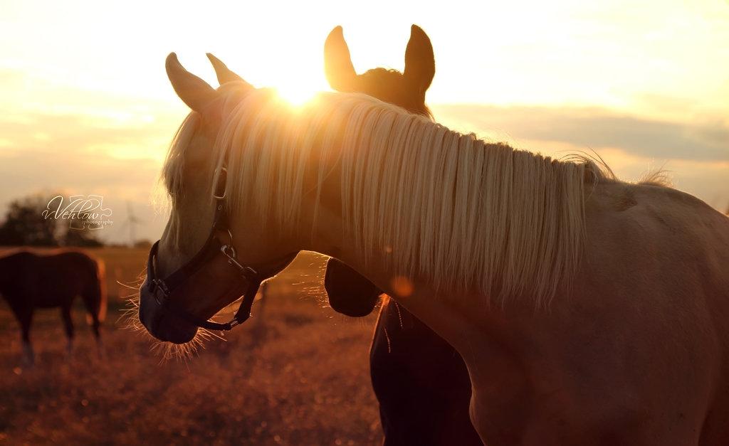 Конь солнце картинки