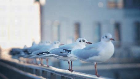 Фото Чайки утром на перилах моста