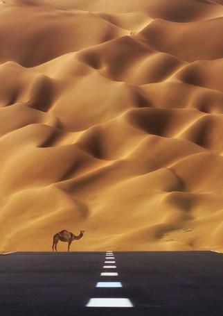 Фото Верблюд стоит на дороге, уходящей в пески