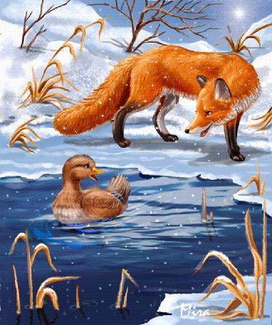 Фото Лиса зимой караулит уточку, которая плавает все в сужающейся полынье, сказка Серая шейка