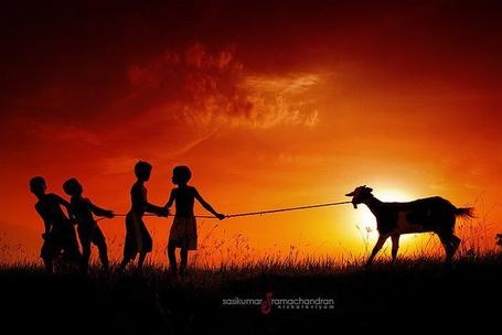 Фото Дети держат козу на привязи на фоне заката, by Sasikumar Ramachandran